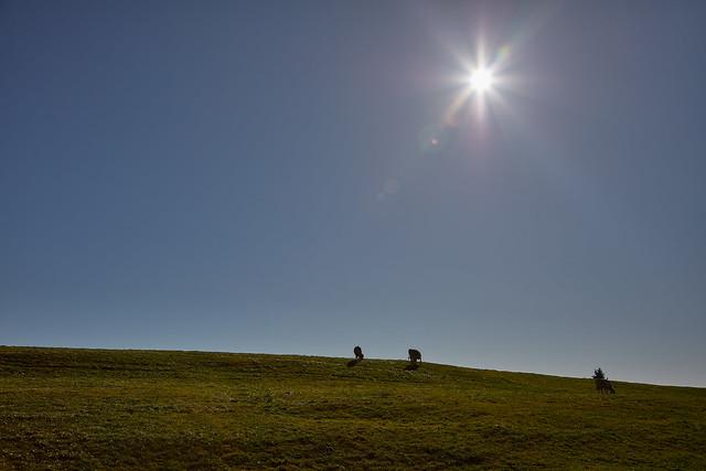 Weissentein mountain – Pastures