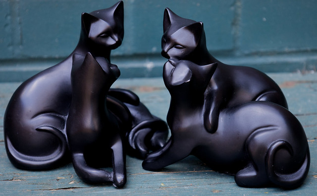 A meeting of black cats.    Our Daily Challenge - Black  IMG_3068