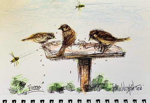 Sparrows on the bird table. Ballpoint pen and coloured pencil drawing by jmsw. Just for Fun.