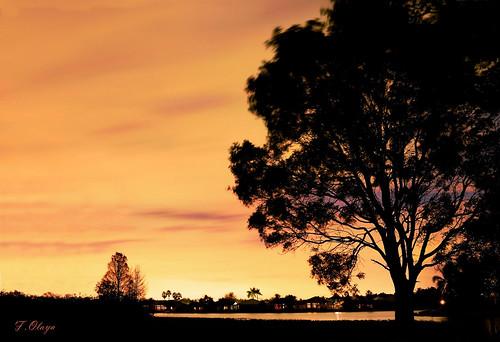 "nikon noche longexposure frankolaya weston florida usa largaexposicion naranja laguna pantano silueta contraluz arbol brisa nikond5300 landscape nocturna ""nikonflickraward"""