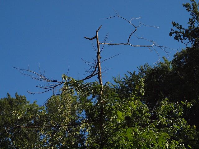 Baum stirbt