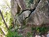 Sur le PR6, dans la descente Sud de Ranedda (direction Pisciaronu) : le long du grand bloc rocheux de la descente