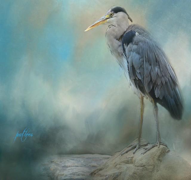 Great Blue Heron....(Explored)