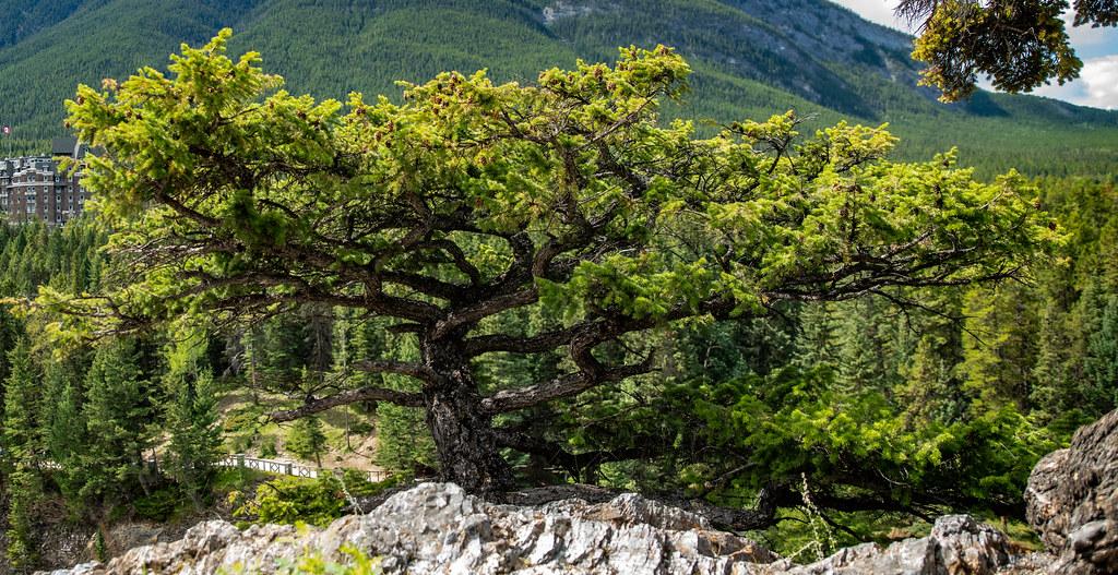 Banff_5