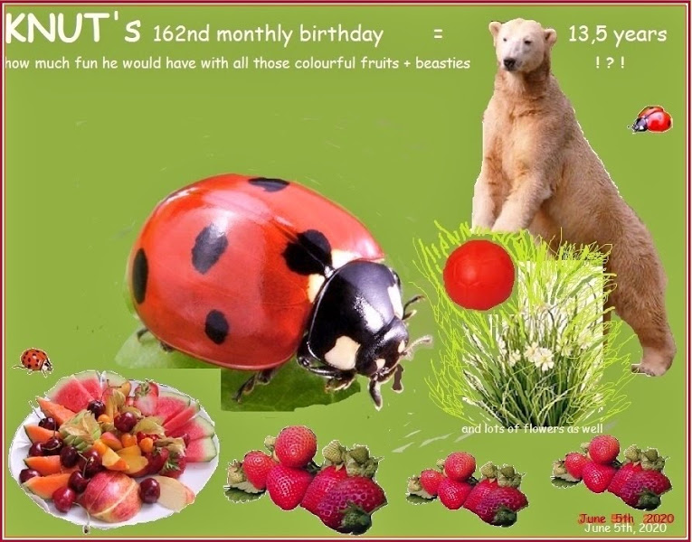 KNUT_162ndMonthly_Vers2_5June2020_COLLAGE_Mo_19h00_200525