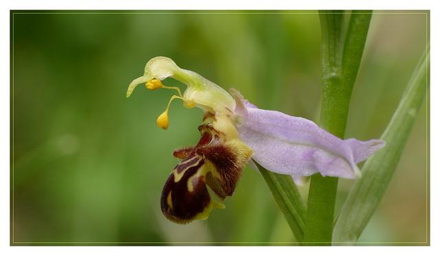 Ma photo d'orchidée préférée de ce printemps