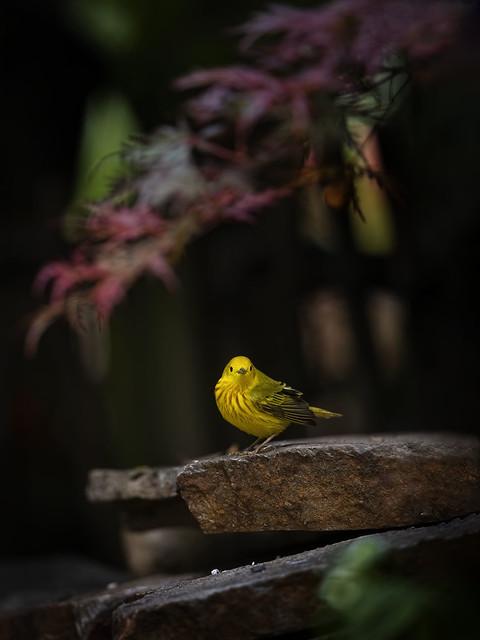 Backyard Visitor...