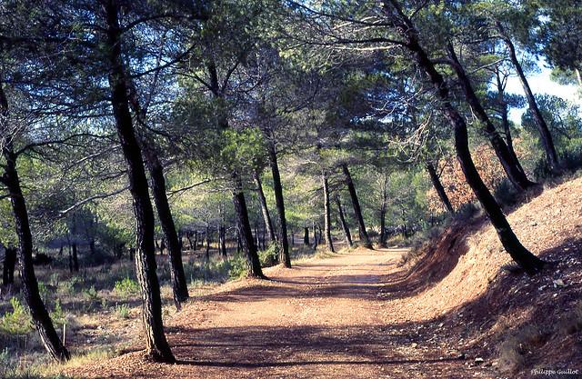 Dans la forêt de Roques-Hautes
