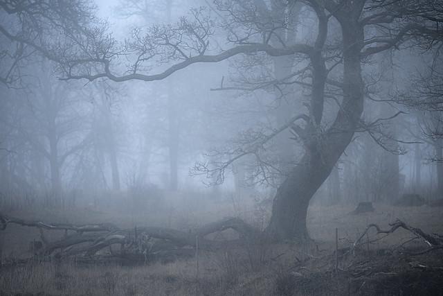 Fog in the Oak Tree Pasture