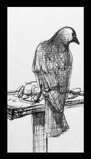 Jackdaw on the bird table, today. Ballpoint pen drawing by jmsw. Just for fun.