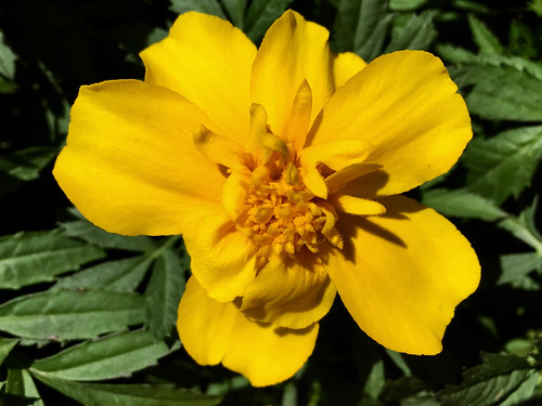 Bright & Beautiful ~ Marigold