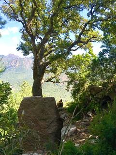 Sur le PR6, dans la descente Sud de Ranedda (direction Pisciaronu) :  vue sur la vallée