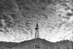 2020 Windmill reflection in a tank below Crow Windmill