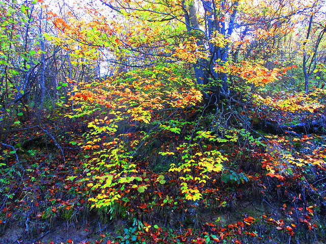 šumski kolorit