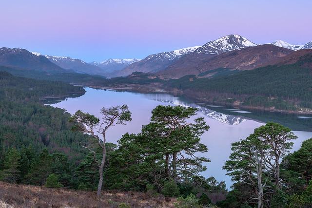Scots pine sunrise