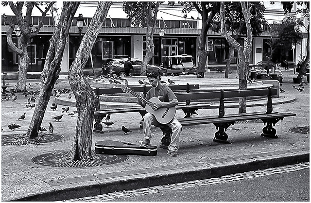 Músico Callejero (Street Musician)