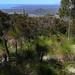 Burrumbush from the summit of Mt Storth 0520