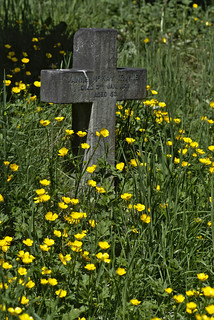 buttercups and stone cross
