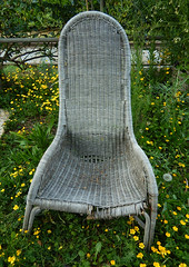 old woven chair surrounded by buttercups