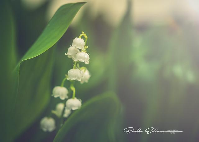 ~Tears of joy are like the summer rain drops pierced by sunbeams.