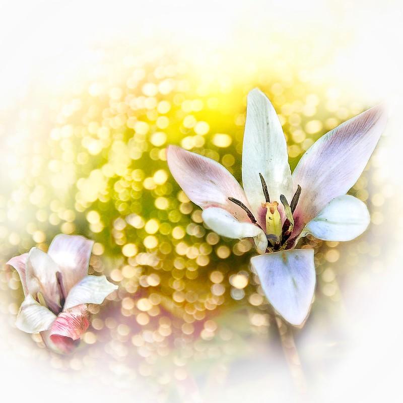 Stratford Ontario ~ Canada ~ Flower Cluster ~ Shakespearean  Garden Botanical  ~ Heritage