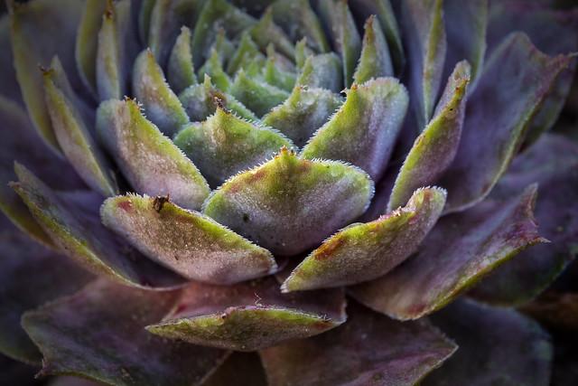 200528 Cactus - 3