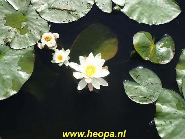 2020-05-27 Zeewolde-Knardijk-Vogelweg (13)