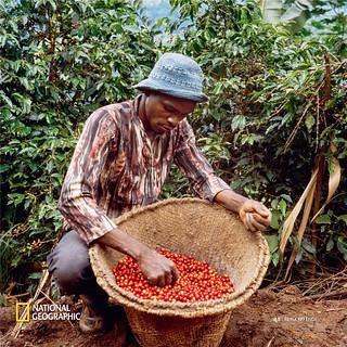 Nespresso X《國家地理》探索咖啡的起源故事:Reviving Origins 產地復興之旅