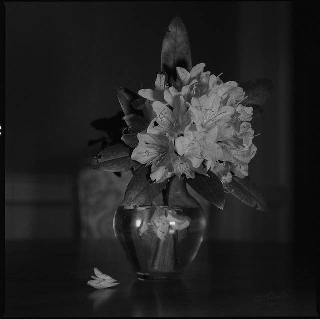 On Table - Film Hasselblad
