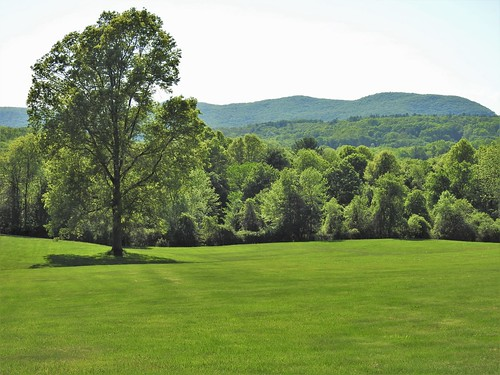 green westernmassachusetts pioneervalley grass trees lawn landscape janelazarz walkingnewengland hills howgreenwasmyvalley