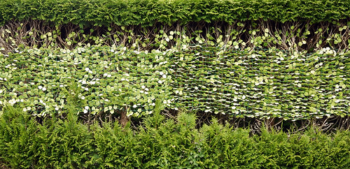 plastic mesh with fake leaves to cover up hedge pruning disaster