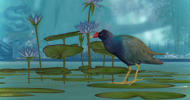 Purple Gallinule ~ Isle of Pandasia