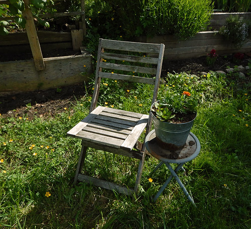 Old chair in a Vancouver garden