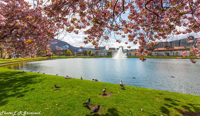Bergen ( 3 )