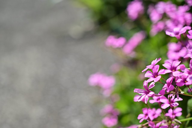 Small flower in neighborhood,Hiyoshi town,Yokohama city 2020/03 No.2.
