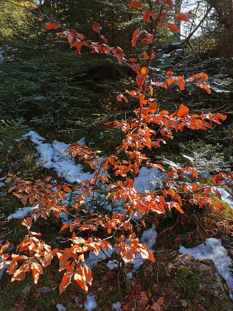 Un joli arbuste très coloré !