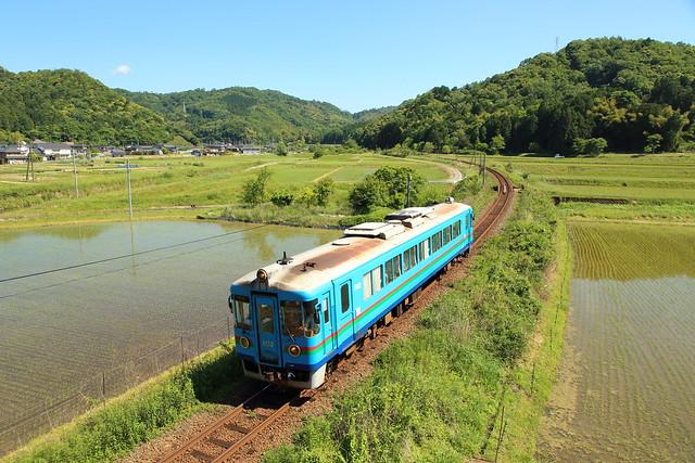 Spring rice fields