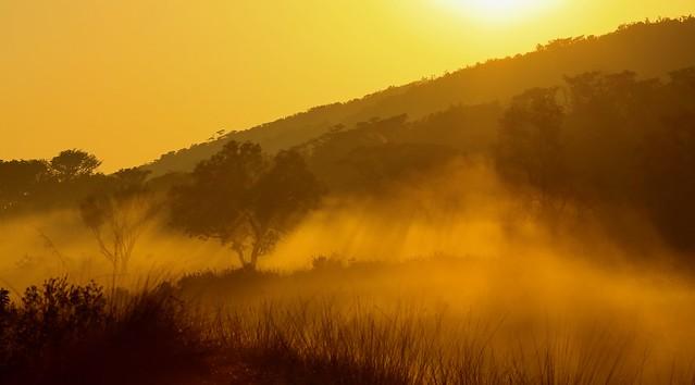 dawn in the bush