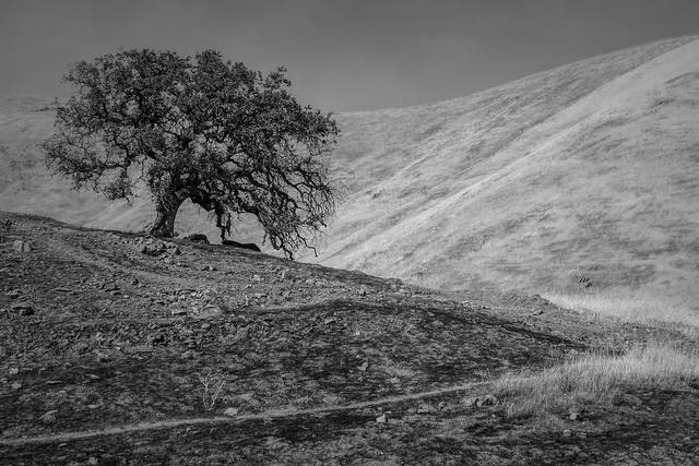 Lonely, California Hills