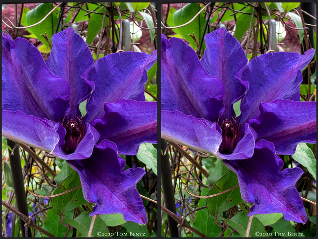 Proud Purple (Stereo)