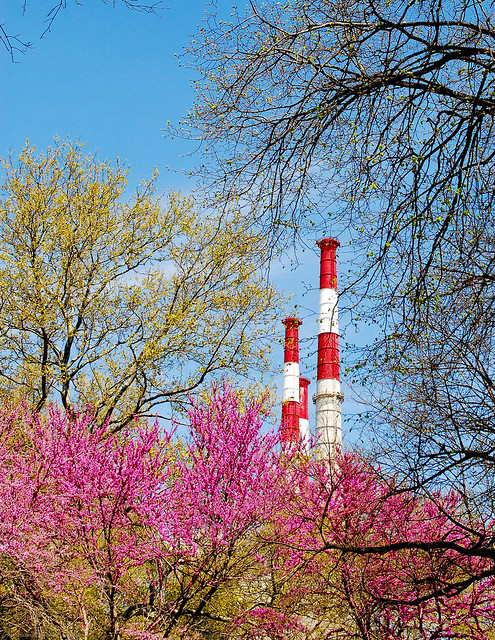 Smokestacks and Trees