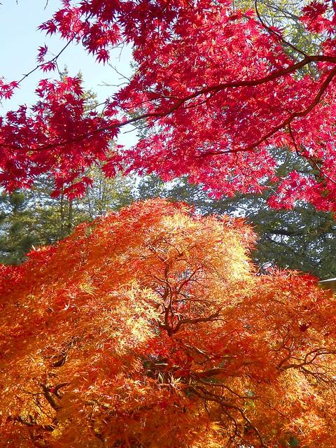 Red and Orange Autumn