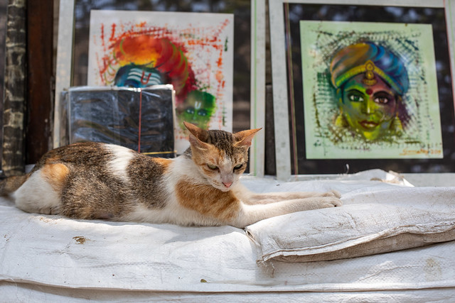 Cats of India, Mumbai