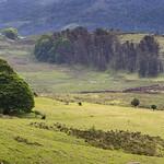 Atxuria meadows