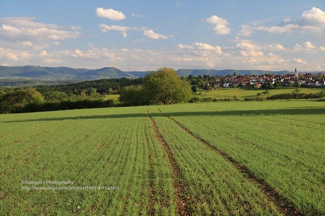 Hohengehren, Heiligenäcker, field