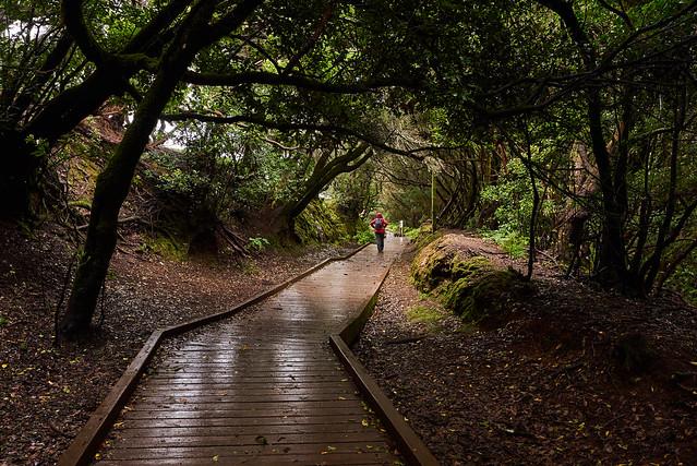 Anaga Park-Fairy forest