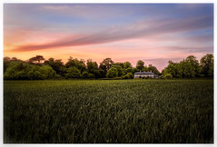 A Hampshire Field at Sunset  (由  Andrew J Hulson