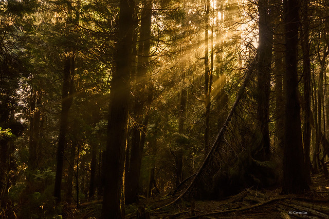 En el pinar