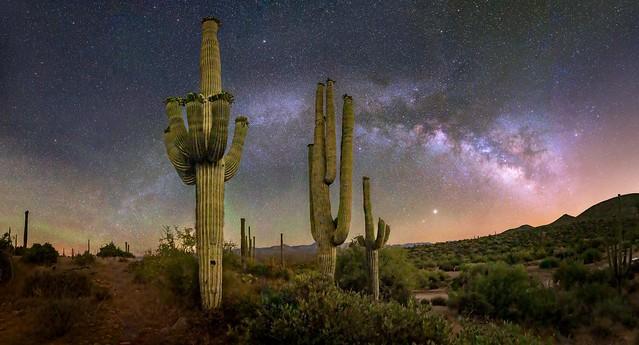 Sonoran Desert VII