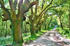 Camino Sanabrés. Ourense